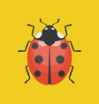 lady bug icon flat design vector image