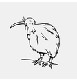 Hand-drawn pencil graphics kiwi bird Engraving vector image vector image