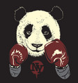 panda in boxing gloves hand drawn bear vector image