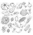 sketch isolated vegetables or veggies icons vector image vector image