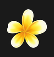 Frangipani flower plumeria isolated on dark vector image