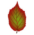 image of red and green autumn tree leaf vector image vector image