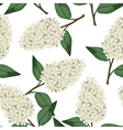 lilac white pattern vector image vector image