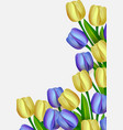 bouquet yellow and blue tulips design template vector image