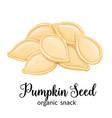 pumpkin seeds vector image