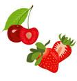 strawberries and cherries summer fruit vector image vector image