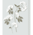 white botanical vector image vector image