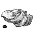 behemoth hippo hand drawn vector image