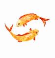 koi fish watercolor vector image vector image