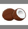 ripe coconuts and half coconut on white vector image