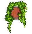 vine in plant pot vector image vector image