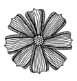 beautiful monochrome gerbera flower vector image vector image