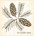 fir conifer cones set vector image vector image