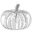 hand drawn sketch pumpkin vector image