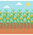 Background of corn field vector image