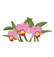 orchid cattleya bloom blossom bouquet exotic vector image vector image