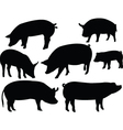 pig collection vector image vector image