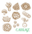 sketch icons of cabbage vegetables vector image vector image