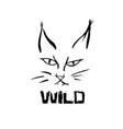 lynx grunge print of wild cat vector image