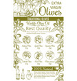 olive oil sketch banner of green fruit and branch vector image vector image