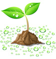 Beautiful young sprout vector image vector image