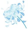 Blue chrysanthemum flower vector image vector image