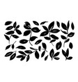 brush leaf collection eucalyptus foliage vector image