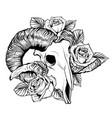 goat skull goat devilish vector image vector image
