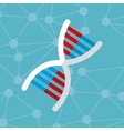 dna molecule structure genetics vector image