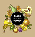 hand drawn fruits collection botanical banner vector image vector image