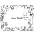 hand drawn of podded vegetables frame vector image vector image