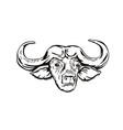 head of cape buffalo or african buffalo syncerus vector image vector image