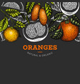 citrus fruits design template hand drawn colour vector image