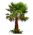 painted fluffy palm tree with grass bushes at the vector image vector image
