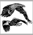 set soaring eagles eagle in flight vector image vector image