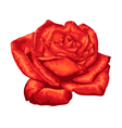 beautiful red rose with the effect of a watercolor vector image