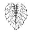 sketch monstera leaf vector image