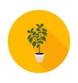 flat icon ficus vector image vector image