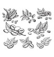 coffee grains and leaves vector image