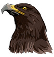 golden eagle on white vector image vector image