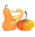 three different pumpkin isolated on white vector image vector image