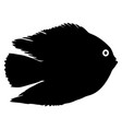 Black silhouette of aquarium fish on white