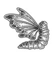 caterpillar with butterfly wings sketch vector image