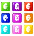 kidney set 9 vector image vector image