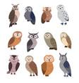 collection cute cartoon owls vector image