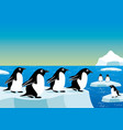 cheerful penguins on an ice floe vector image vector image