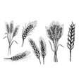 collection set of wheat ears vector image vector image