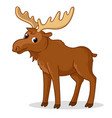 cute moose with big horns is standing on a white vector image
