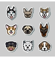 Dogs dog breeds vector image vector image