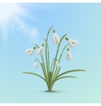Snowdrop flowers spring background vector image